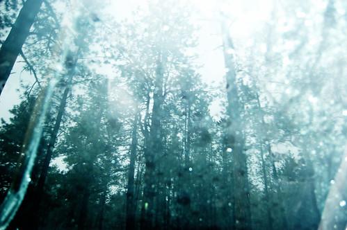 rainy forest.jpg