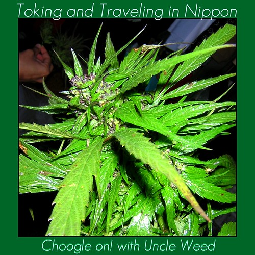 toking and travelin in nippon