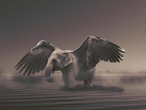 an elephant por Łukasz Strachanowski.