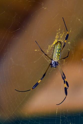 Las arañas tambien son bellas 2749806902_4ff65cf0c1