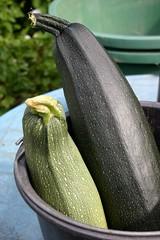 Zucchini monster