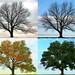 Four Seasons - Longbridge Road