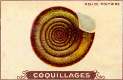 coquillages8