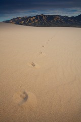 Fox Tracks (Nick Carver Photography) Tags: california ca travel usa nature vertical canon landscape outdoors landscapes sand rocks desert general wildlife country wilderness names southerncalifornia sanddune orientation pawprints mojavedesert regions citystate mojavenationalpreserve canoneos5d eos5d beautyinnature kelsosanddunes natureparks nickcarver photospecs stockcategories ncpfineartprint nationalparksystem geographicfeatures locationssubjects