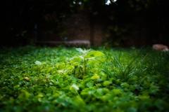 The Grass Ends Here!.. (SonOfJordan) Tags: light colour green nature grass eos shadows amman xsi 450d  samawi sonofjordan shadisamawi  wwwshadisamawicom