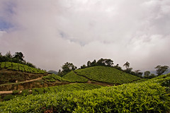 Kolukkumalai - Way back (Kris Kumar) Tags: trip vacation mountain cloudy tea may kerala plantation 2008 southindia munnar idukki kolukkumalai canon40d keralatrip2008