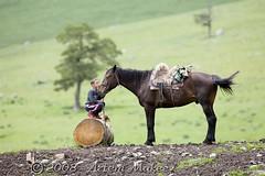 IMG_4607 (White Bear) Tags: summer horses horse mountains russia russian россия лошадь русский конь кони лошади русские российская россии karachai российской