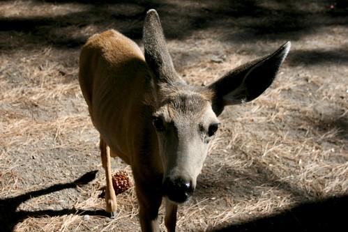 Yes, Deer