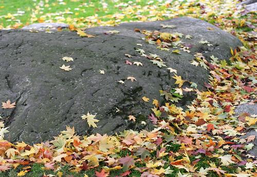 Autumn Colours 08 -2