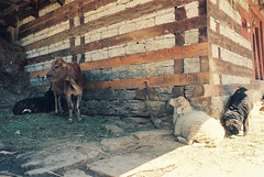 Himachal Pradesh 1999