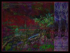 The Long Night (Tim Noonan) Tags: trees art night digital photoshop dark artistic harbour expression manipulation effect haunt treatment cubism stealingshadows qualitypixels sharingart maxfudge awardtree maxfudgeexcellence maxfudgeawardandexcellencegroup