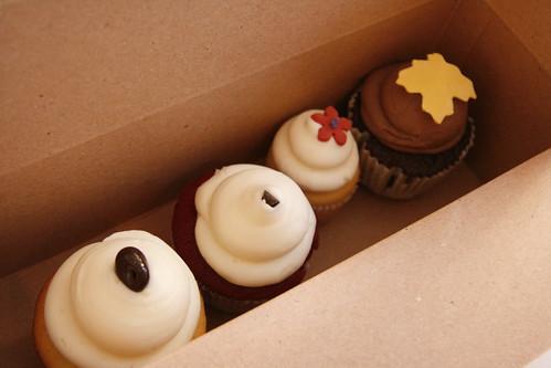 sweet cupcakes, boston