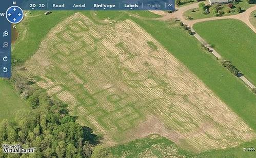 Schaefer Farms Corn Field Maze