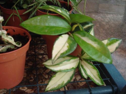 Mis plantas y sus flores 2955650896_5fb20df8b4