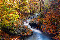 Fall in the Balkan (Evgeni Dinev) Tags: autumn reserve bulgaria  centralbalkan   starareka