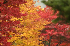 Red And Yellow And Red And Green (lets.book) Tags: autumn fall jamie korea workshop seoul 2008 teambuilding oakvalley letsbook