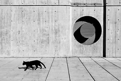 Circling around (zaqi) Tags: street blackandwhite bw blancoynegro argentina cat calle buenosaires compositions bn gato biblioteca mta zaqi szaqii
