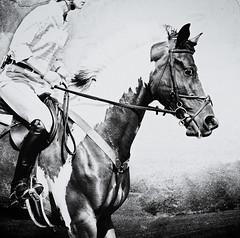 Dorset Hunter-Jumper: Beautiful Pinto! (Isabelle Ann) Tags: horse art digital caballo cheval jumping vermont photographer digitalart isabelle cavallo cavalo pferd equine equus paard horseshows hunterjumper manchestervt dorsetvt equineart vermontsummerfestival isabelleann isabelleanngreen equestrianart hunterjumpers dorsetsummerfestival equinephotographer dorsethunterjumper hunterjumpershows artistichorse isabellegreen equitationart hunterjumperart dorsethorseshow hunterjumperphotography hunterjumprphotographer isabellegreenphotography isabelleannphotography isabelleannhorses mostbeautifulhorses equineartist hunterjumperphotographer hunterjumperphotograhy