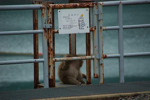 20081103159黒部峡谷の野生猿