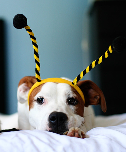 Lucy Bumblebee 3