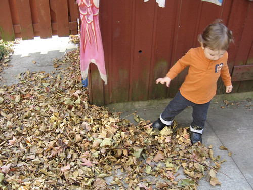 look at all these leaves