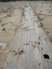 Log in the sand