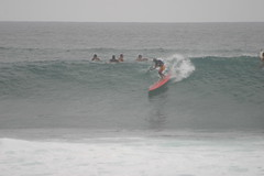 standup paddle boarder (reddawg31) Tags: hawaii oahu surfing northshore banzaipipeline