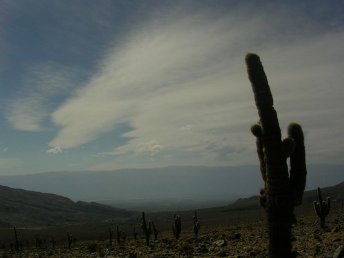 cacti and sky