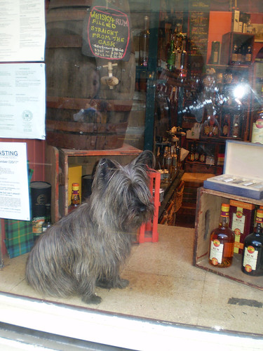 Dog in shop window by ZlatkoGR.