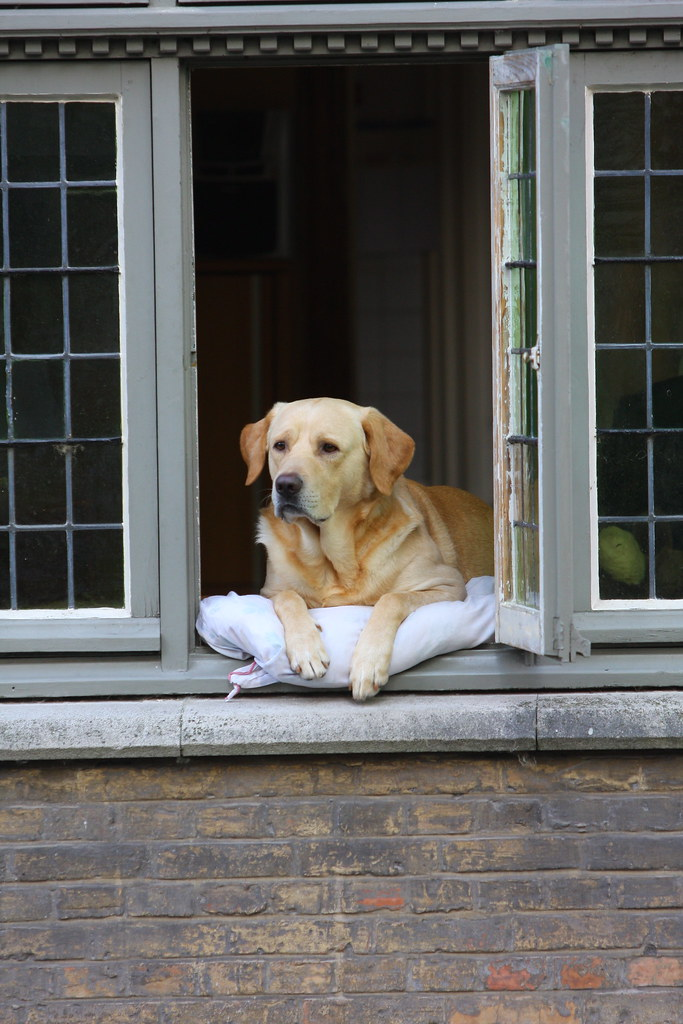 The Most Photographed Dog in Bruges