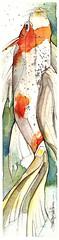 koi 29NOV08 (Jennifer Kraska) Tags: art pen watercolor jennifer koi ballpoint kraska