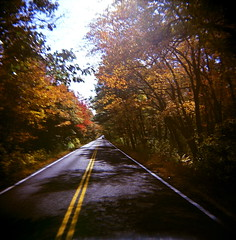 43960002 (The Greenery) Tags: road autumn trees fall film nature holga outdoor foliage colorholga color120 minesterialroad