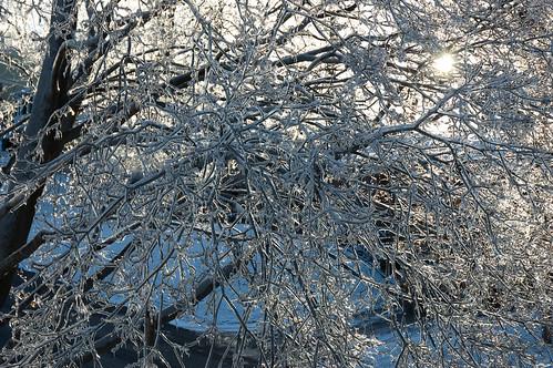 ice storm DSC_1054