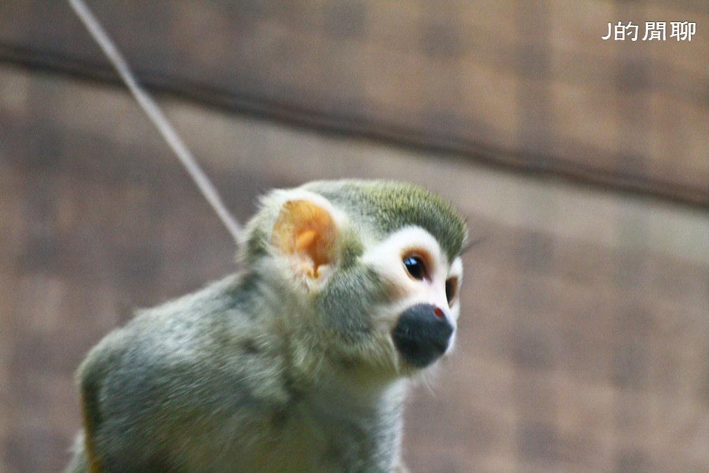 松鼠猴 20110528-085-J的閒聊