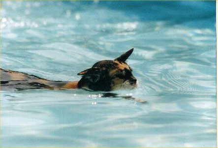 Margarida - The swimming cat!