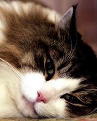 Фото 1 - Польза от кошек всё-таки есть
