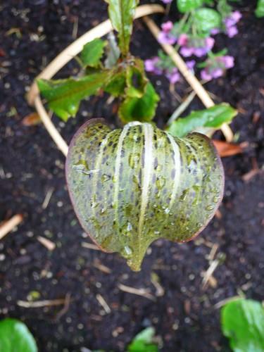 Portland Chinese Garden 5/3/2008
