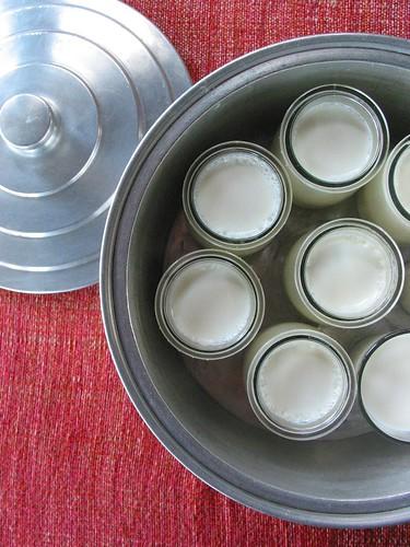 Os iogurtes da casa