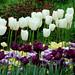 Great Gardening Websites
