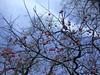 日本京都行屋與樹之美DSCN5700