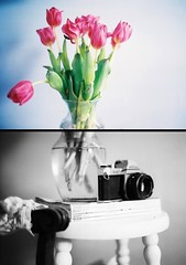 somethings old. somethings new. (for the love of photography) Tags: light tulips pentax favorites myroom teenvogue