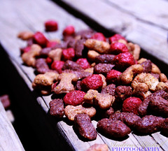 2 of 365 - Dog Food By admitchell08 on flickr