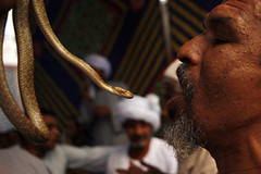 Egyptian Sufi Muslims in Moulid Al-Hussein     (Egyptian Photographer  ) Tags: egypt cairo egyptian muslims sufi  alhussein moulid   photobyamrabdallah