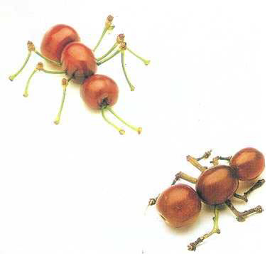 ant berries