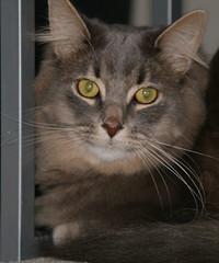 jinx (lonniec61) Tags: cat jinx