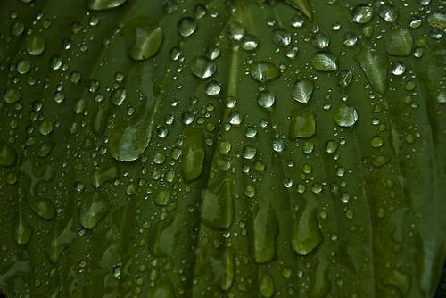 Water Drops from a Summer Rain by zanemerva.