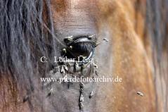 lz220703(13) (Lothar Lenz) Tags: auge fliegen