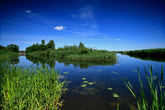 where two rivers meet (Qba from Poland) Tags: blue sky reflection green nature water grass reflections river day poland clear qba sigma1020mm biebrza blueribbonwinner supershot thebp biebrzanationalpark golddragon parknarodowy anawesomeshot aplusphoto goldenphotographer biebrzariver biebrzanskiparknarodowy platinumheartaward natureoutpost betterthangood brzozowkariver goldstaraward top30blue scenicsnotjustlandscapes spiritofphotography damniwishidtakenthat guasdivinas regionwide qbafrompoland