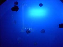 YEAH!! JELLIES!! (steeleme69) Tags: ocean blue water jellyfish
