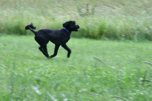 skippy runs